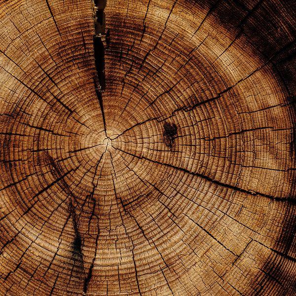 """Lasche 2005 """"Baum"""""""